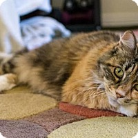 Adopt A Pet :: Penny - Orange County, CA