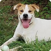 Adopt A Pet :: Dale - Billerica, MA
