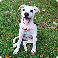Adopt A Pet :: Ammy - Castro Valley, CA