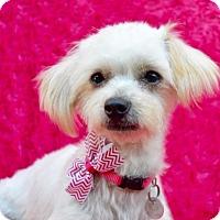 Adopt A Pet :: Tina - Irvine, CA