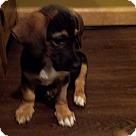 Adopt A Pet :: Harry