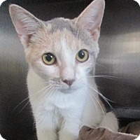 Adopt A Pet :: Maggie - Germantown, MD