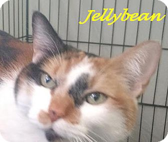 Calico Cat for adoption in Chisholm, Minnesota - JellyBean