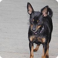 Adopt A Pet :: Coco - Conesus, NY