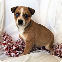 Adopt A Pet :: Noel - Mooresville, NC