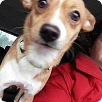 Adopt A Pet :: Lucky - Florence, KY