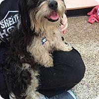 Adopt A Pet :: Isabella - Thousand Oaks, CA