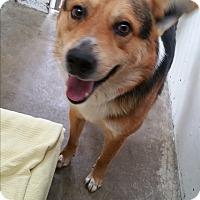 Adopt A Pet :: Si - Chippewa Falls, WI
