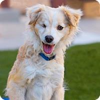 Adopt A Pet :: Dulce - Coronado, CA