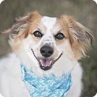 Adopt A Pet :: Tyler - Kingwood, TX