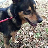 Adopt A Pet :: Chevy - Nashua, NH