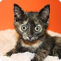 Adopt A Pet :: MAXINE - SILVER SPRING, MD