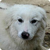 Adopt A Pet :: Ailsa - Bellevue, NE