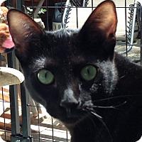 Adopt A Pet :: Fifi - San Rafael, CA