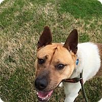 Adopt A Pet :: Yoshi - Marion, AR
