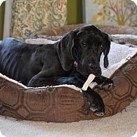 Adopt A Pet :: Agnes (Aggie) - O'Fallon, MO