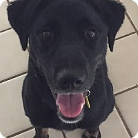 Adopt A Pet :: HAILEY- PENDING ADOPTION!! - Birmingham, MI