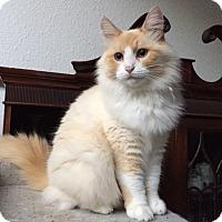 Adopt A Pet :: Gabrielle - Davis, CA