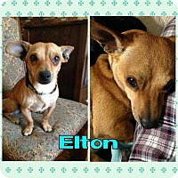 Adopt A Pet :: Elton - bridgeport, CT