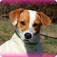 Adopt A Pet :: Krissy~ meet me! - Glastonbury, CT