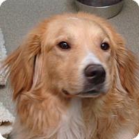 Adopt A Pet :: Chipper - Pacific, MO