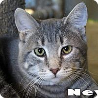 Adopt A Pet :: Nevil - Texarkana, AR