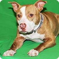 Adopt A Pet :: Della-Adopted! - Detroit, MI