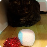 Adopt A Pet :: Misty - Mesa, AZ