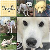 Adopt A Pet :: Twyla  *Adopted - Tulsa, OK