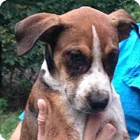 Adopt A Pet :: Holden - Albany, NY