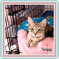 Adopt A Pet :: Twiggy - New Richmond,, WI