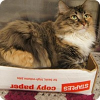 Adopt A Pet :: Leilani - Baltimore, MD