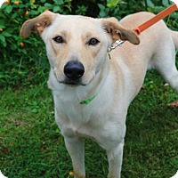 Adopt A Pet :: Sam - Chester Springs, PA