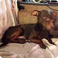 Adopt A Pet :: Espresso - Savannah, GA