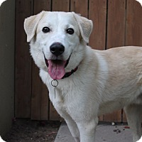 Adopt A Pet :: Floyd - Los Angeles, CA