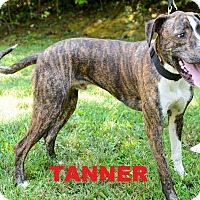 Adopt A Pet :: Tanner - Broadway, NJ