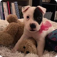 Adopt A Pet :: Noel - Suwanee, GA