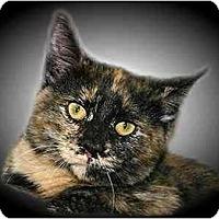 Adopt A Pet :: Liza - Montgomery, IL