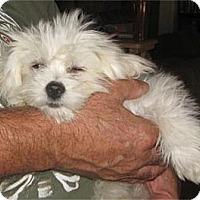 Adopt A Pet :: Simon - Golden Valley, AZ