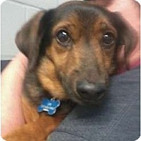 Adopt A Pet :: Charlie - Indianapolis, IN