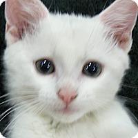 Adopt A Pet :: Beethoven - Springfield, PA