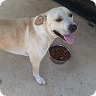 Adopt A Pet :: ELDORADO *Needs Foster