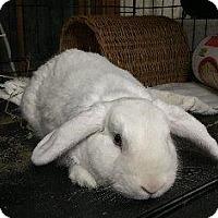 Adopt A Pet :: Dash - Woburn, MA