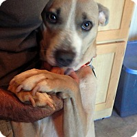 Adopt A Pet :: Betsy - Syracuse, IN