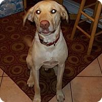 Adopt A Pet :: Manny - Bridgewater, NJ