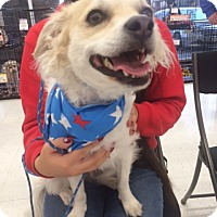 Adopt A Pet :: Miley - San Pedro, CA