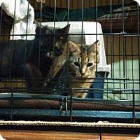 Adopt A Pet :: Rei - New York, NY