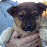 Adopt A Pet :: Scout (8 lb) - SUSSEX, NJ