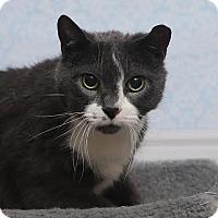 Adopt A Pet :: Gino - Chippewa Falls, WI