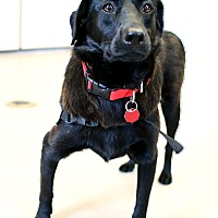 Adopt A Pet :: Leah *In Foster* - Appleton, WI